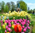 tulips in foreground, statue in background